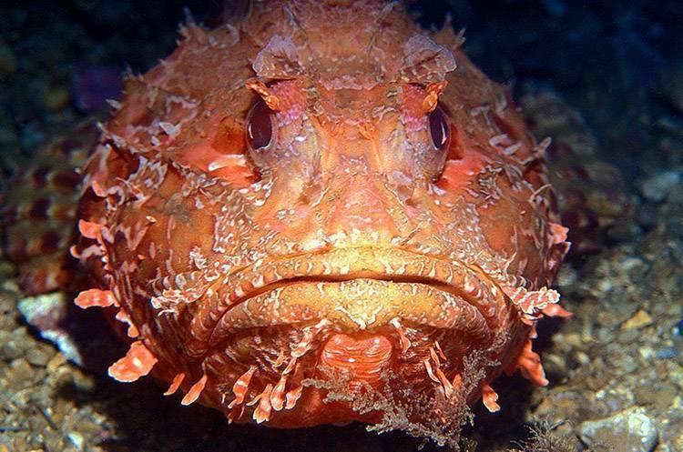Самые ядовитые рыбы нашей планеты