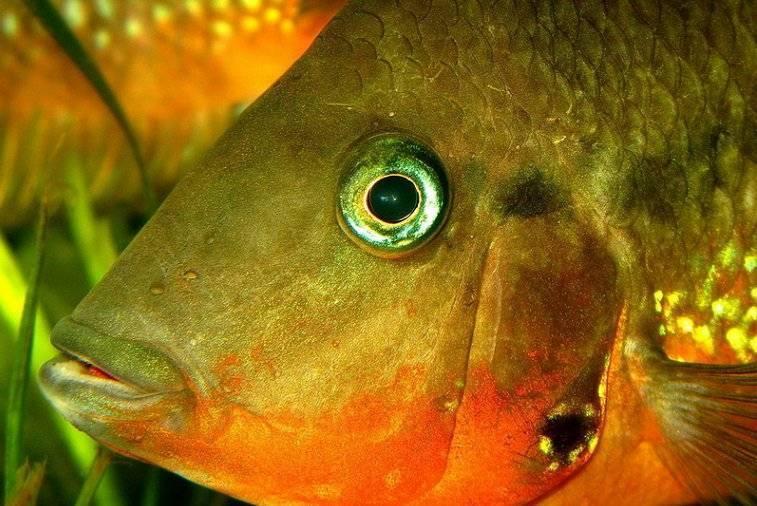 Видят ли рыбы в темноте. какое максимальное расстояние видят рыбы. строение тела рыб и их движение
