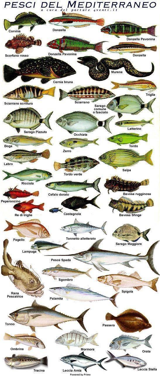 Фото и список красных рыбок для вашего аквариума
