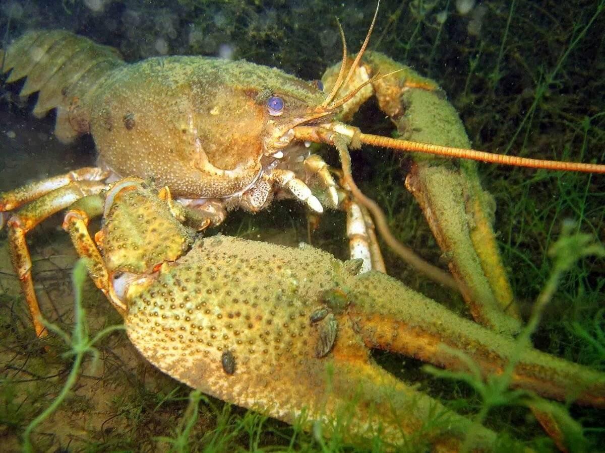 Рыба с красными плавниками: название, описание, фото