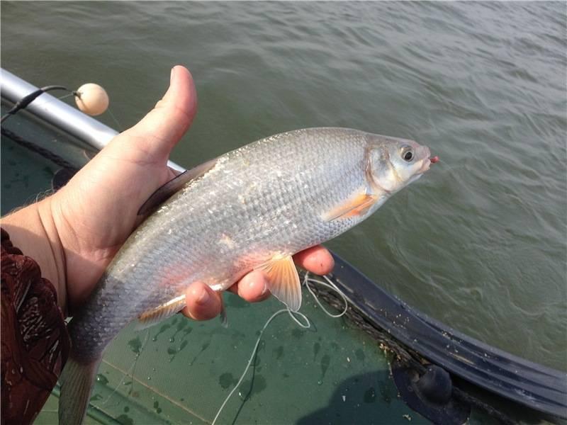 Удочки для зимней рыбалки: виды, приманки, оснастка, как сделать удочку своими руками
