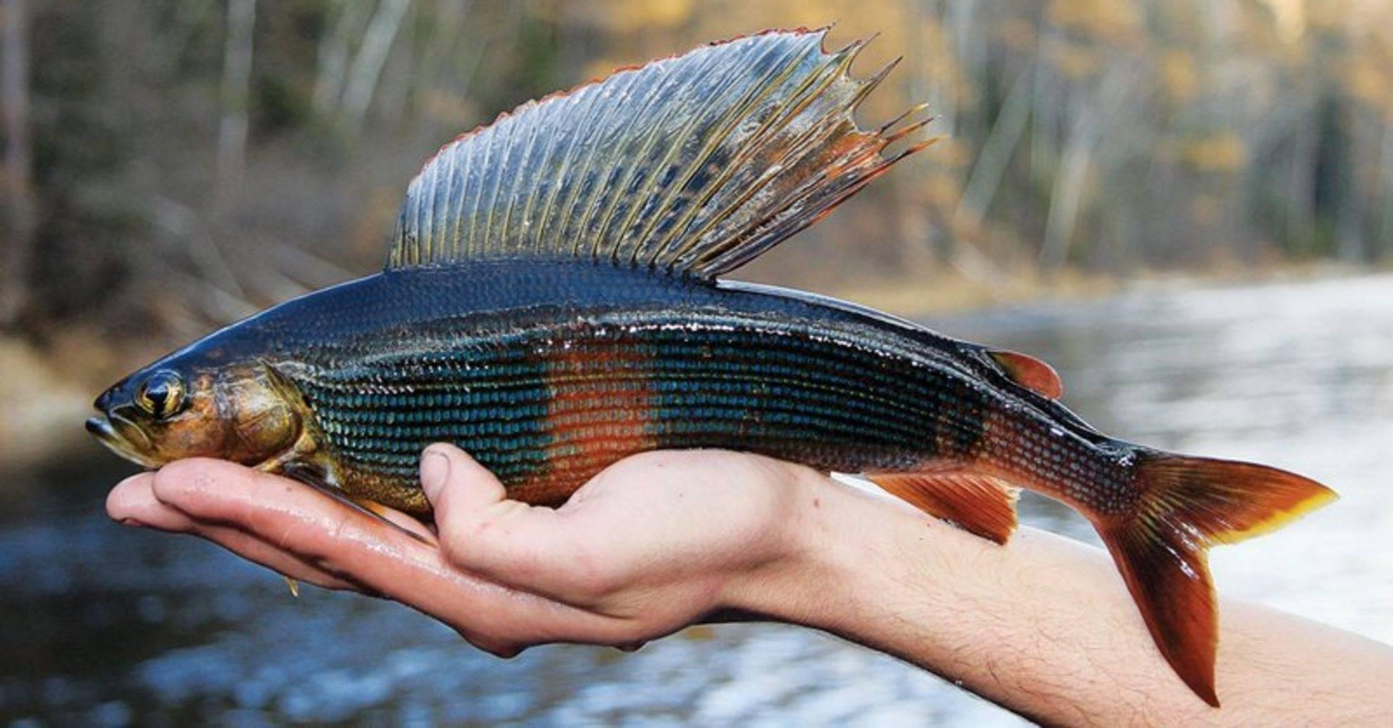 Рыбалка на реке угре
