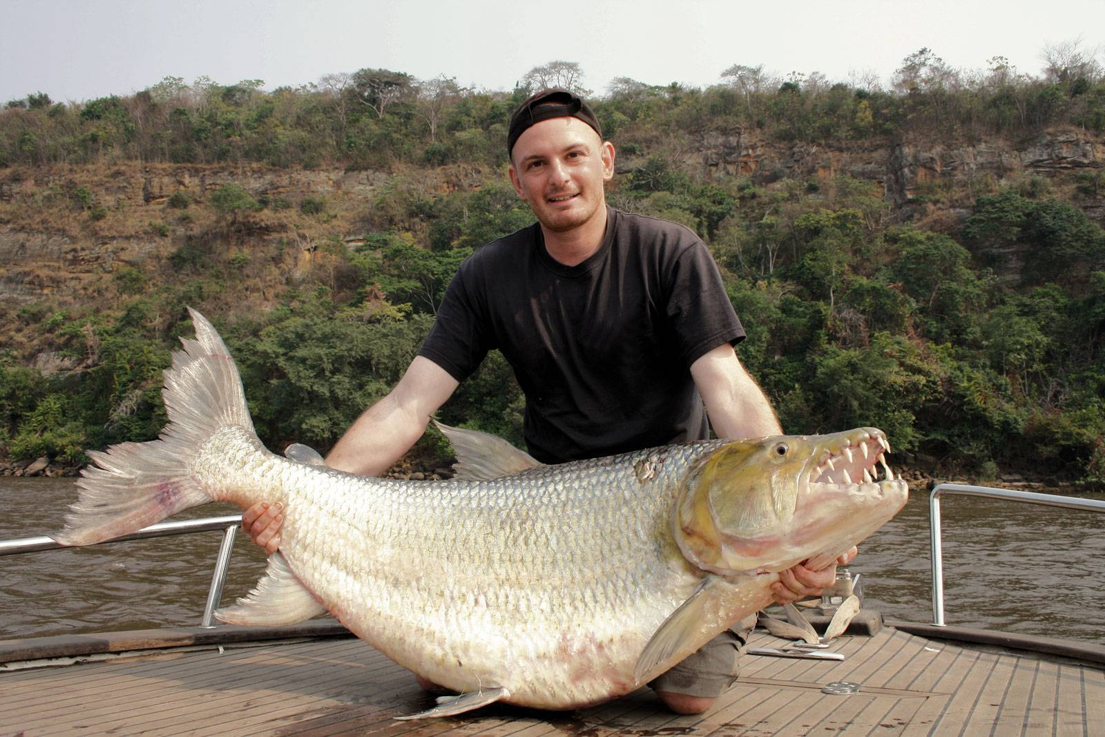 Тигровая рыба голиаф: описание и характеристики