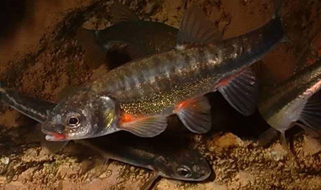 Речная рыба — список, особенности поведения, рыбалка