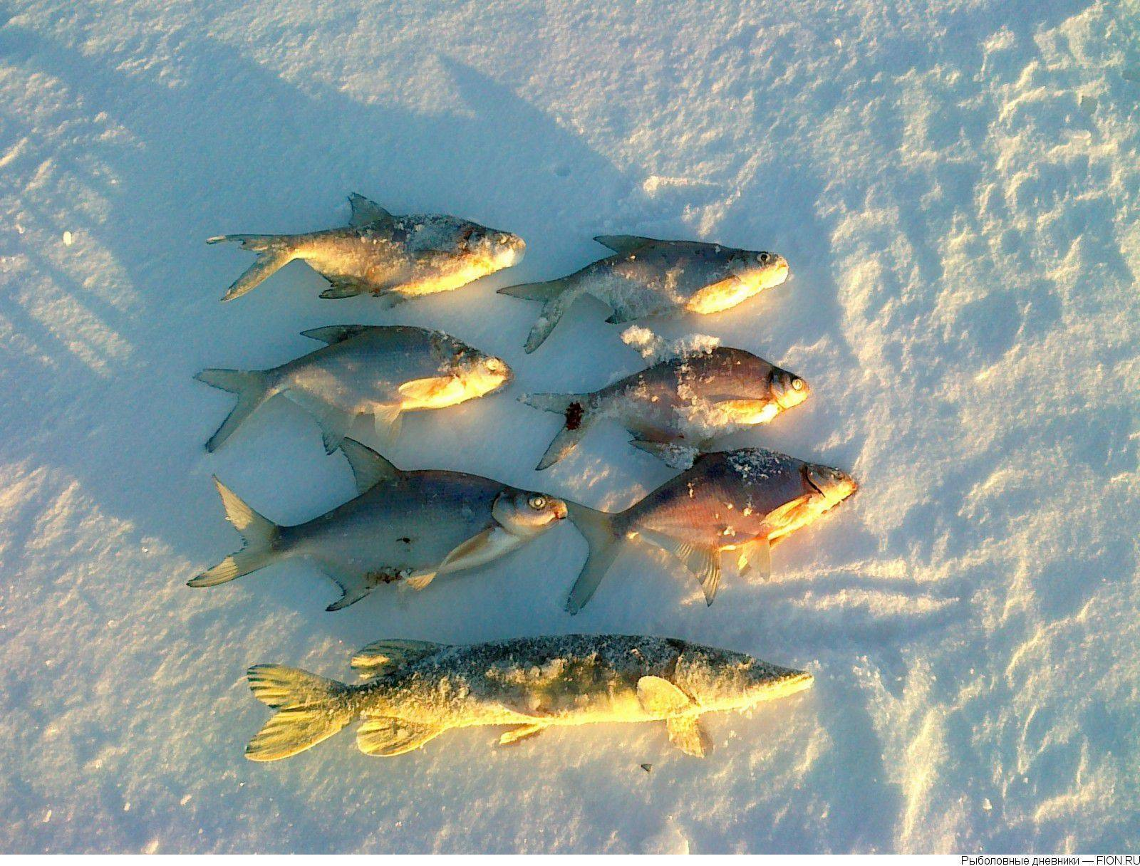 Платная рыбалка в можайском - рыбалка