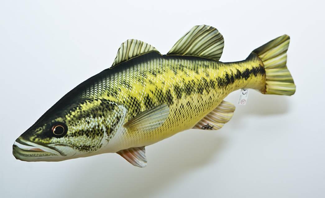 Рыба басс: описание, среда обитания, особенности и свойства