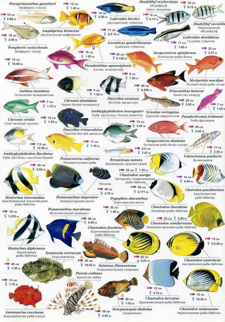 Чем полезна и чем вредна рыба саворин | польза и вред