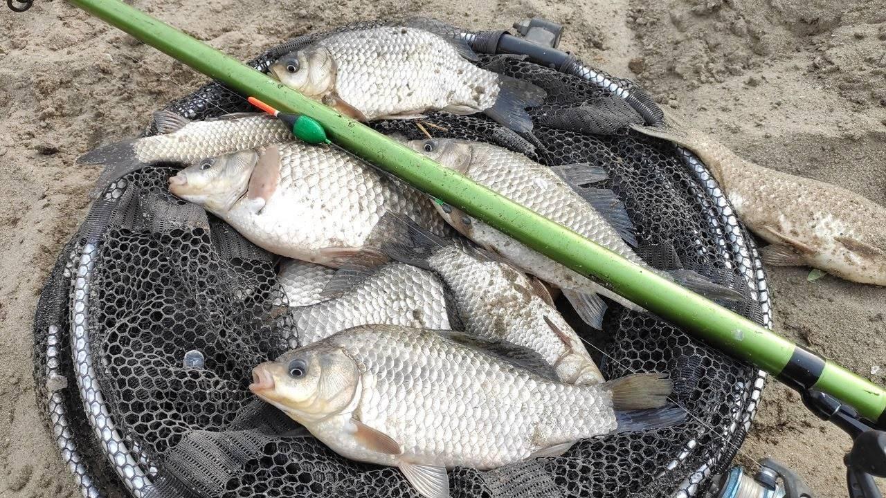 Ловля карася весной - секреты и тонкости ловли на поплавочную удочку - на рыбалке!
