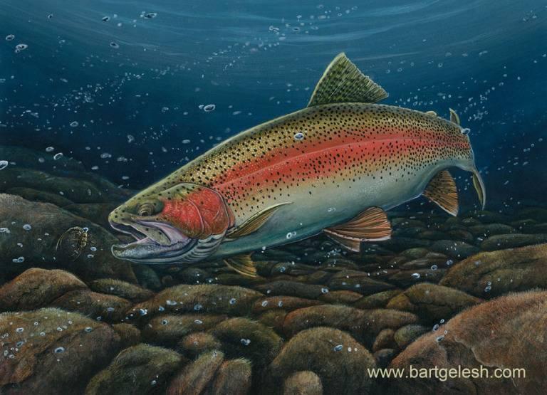 Форель рыба. образ жизни и среда обитания рыбы форель