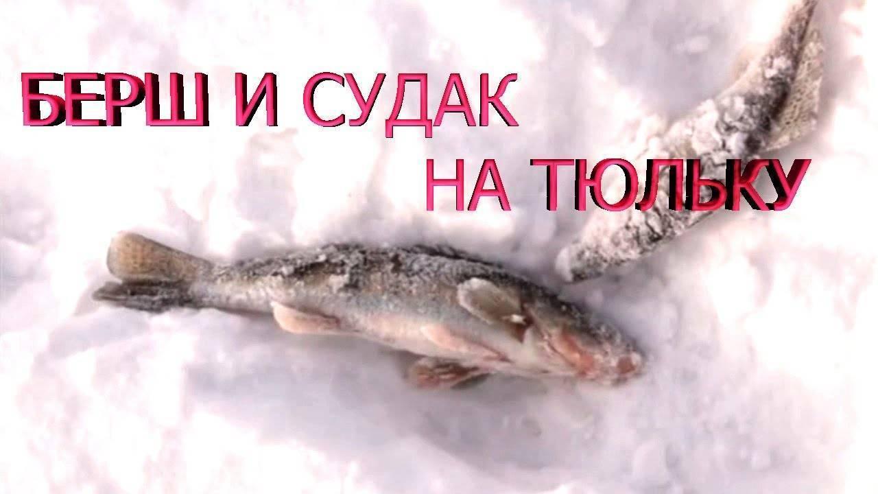 Как ловить берша зимой на тюльку разными снастями как ловить берша зимой на тюльку разными снастями