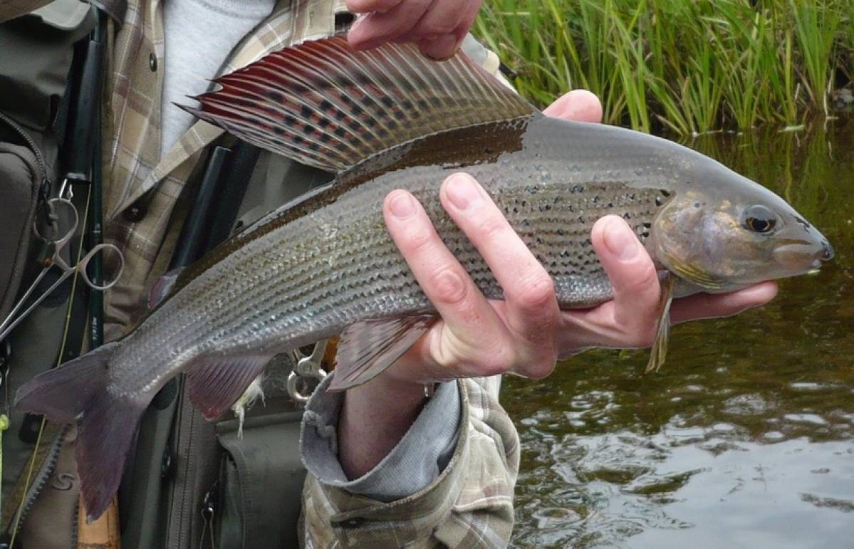 Рыбалка на байкале летом и зимой, места для рыбной ловли