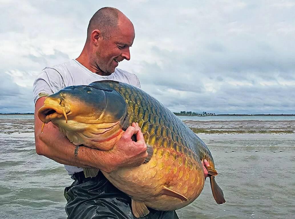 Самый большой карп – мечта рыболова