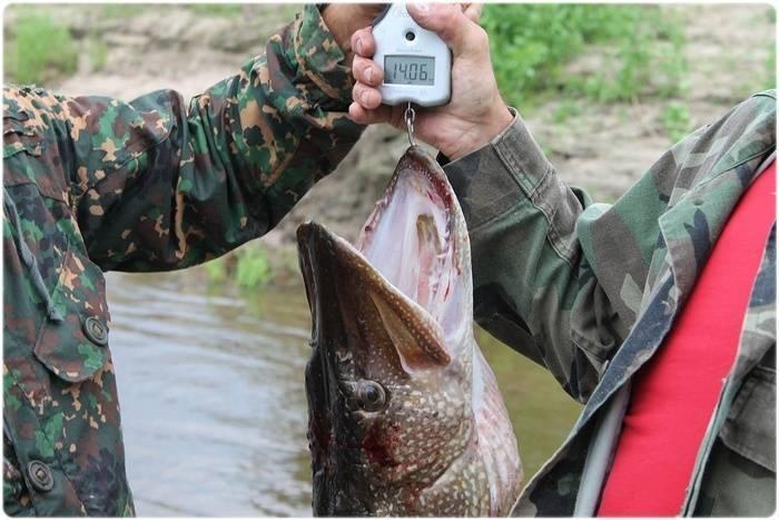 Рыбалка в могилевской области. отчеты