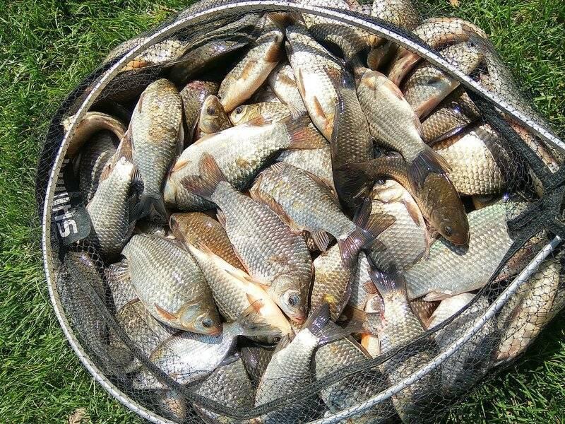 Рыбалка на щуку в подмосковье