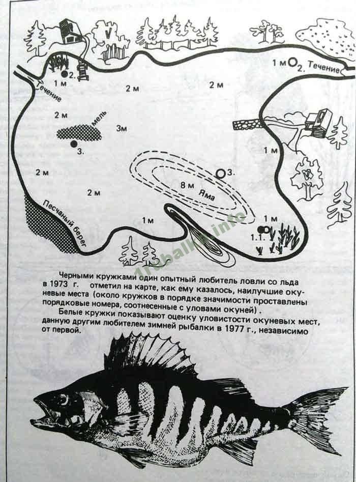 Тест: какой вы рыбак и что вы знаете о рыбалке | fishbook