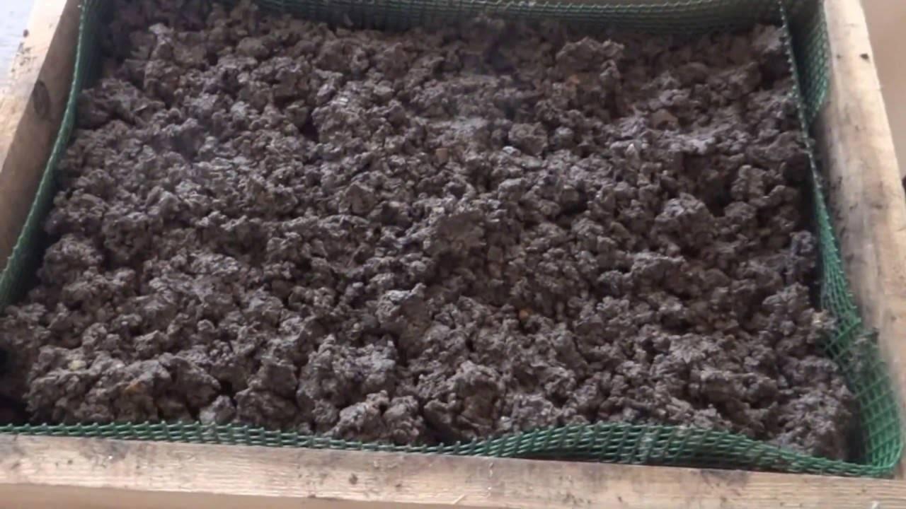 Выращивание и разведение червей как бизнес. возможно ли разведение червей в домашних условиях?