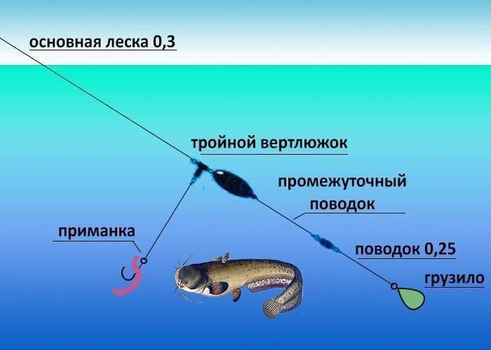 Как ловить сома с берега?