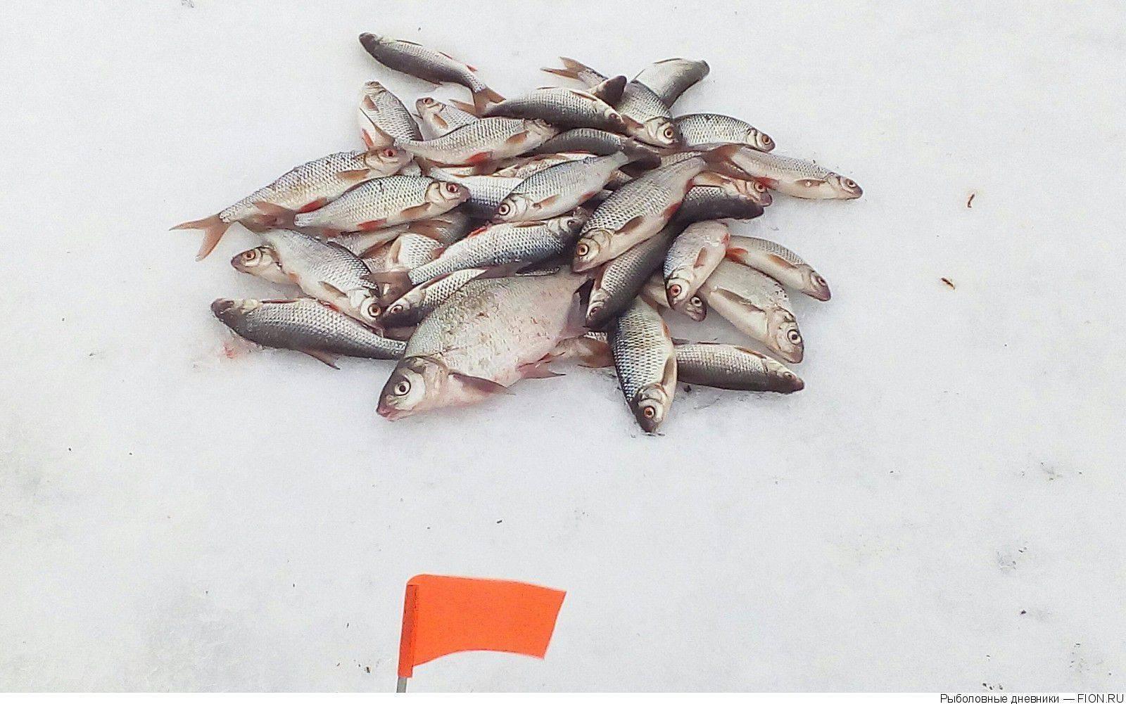 Отзывы о рыбалке на можайском водохранилище и базы для рыбаков – суперулов – интернет-портал о рыбалке