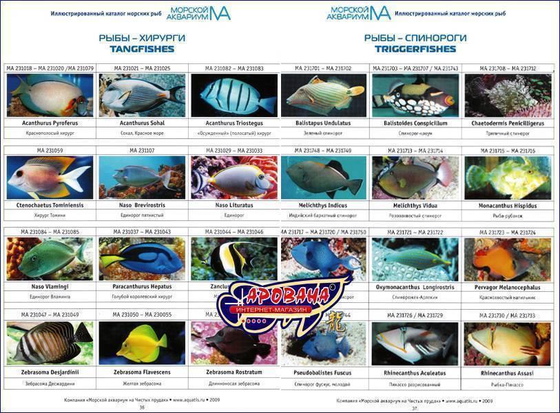 Масляная рыба: что это за рыба, описание, где водится, польза