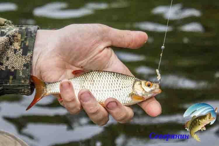 Рыболовные крючки, размеры и типы для рыбалки на разных рыб (таблица)