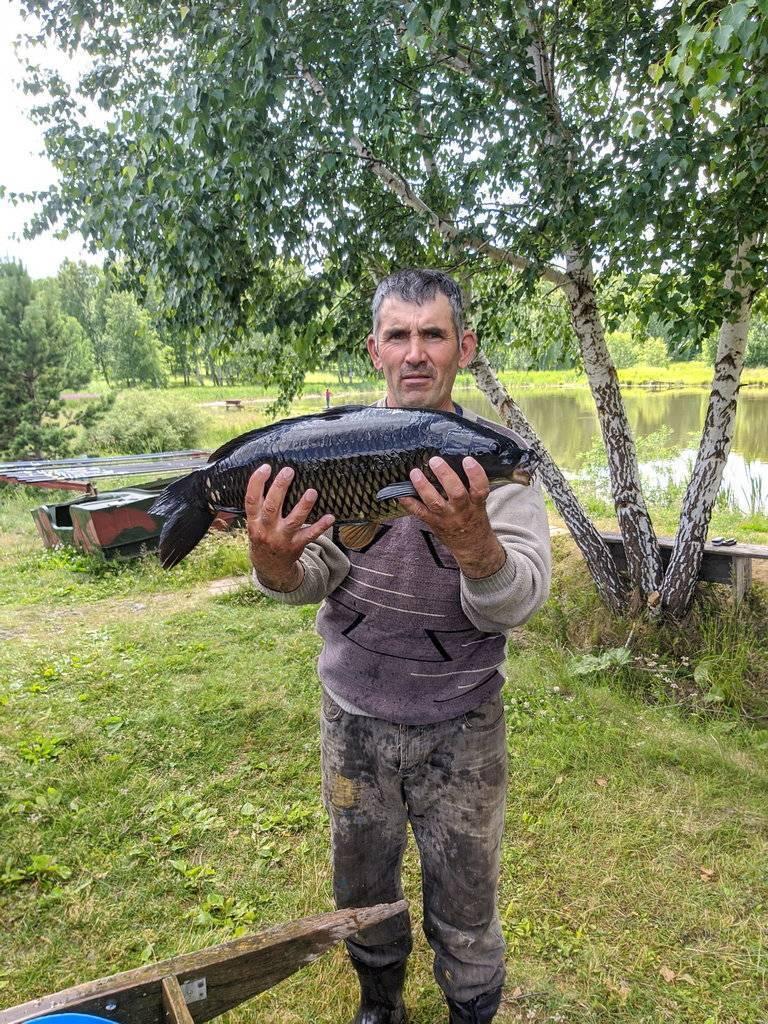Окончательный гид по местам для платной рыбалки в окрестностях екатеринбурга — на природе — выбирай.ру — екатеринбург