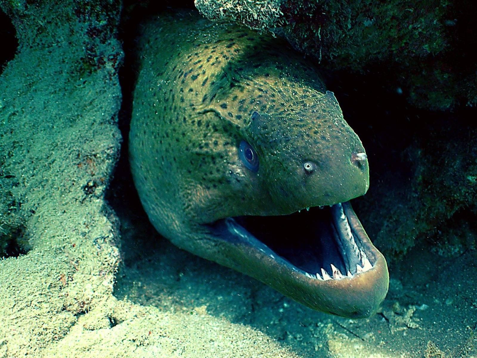 Рыбы чёрного моря: перечень, описание и особенности