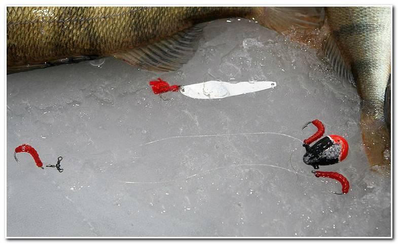 Подледная ловля окуня на балду