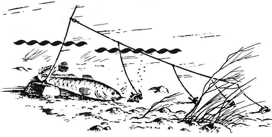 Береговая ловля налима осенью: снасти, оснастка, поиск рыбы и наживка