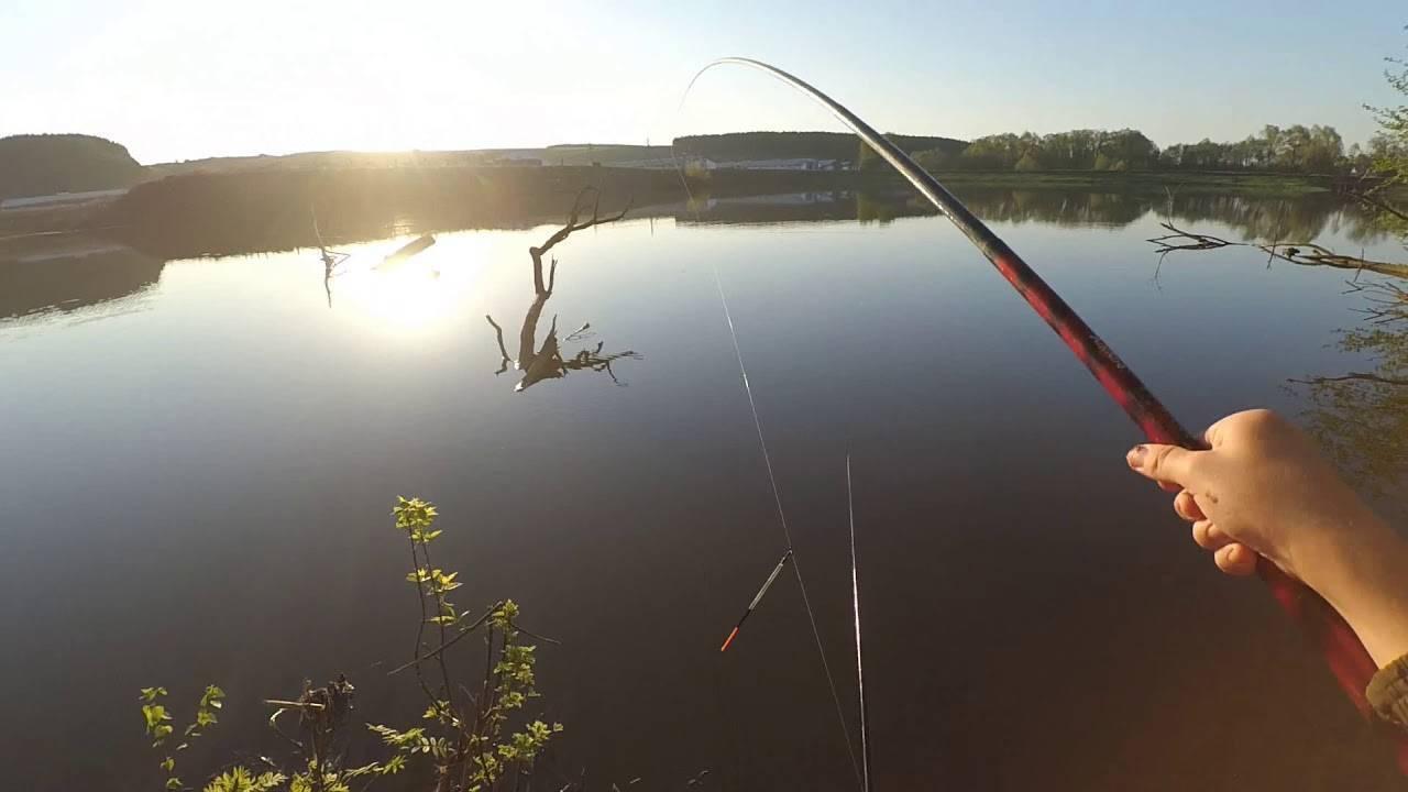 Ловля плотвы летом - на поплавочную удочку, фидер, мормышку, нахлыст видео