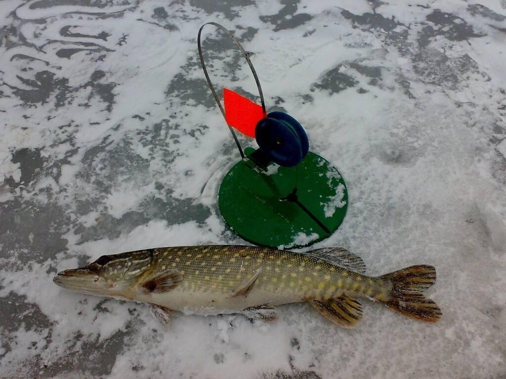 Нюансы оснащения зимней жерлицы в зависимости от условий ловли - спортивное рыболовство