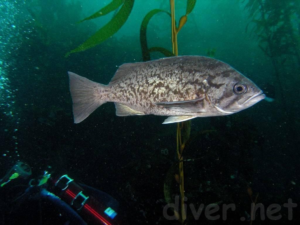 Окунь: описание речной и морской рыбы, повадки, способ ловли