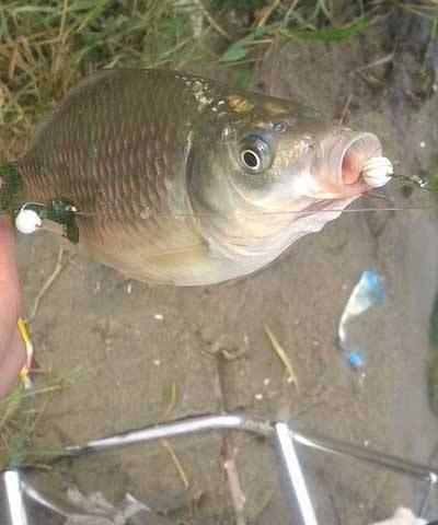 Ловля леща на пенопластовые шарики - самоделки для рыбалки своими руками