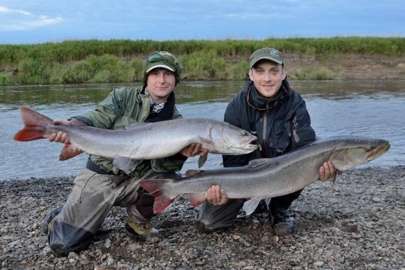 Рыбалка на суре — какие виды водятся в реке мордовии, особенности ловли