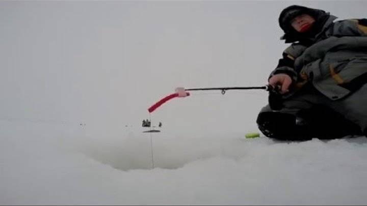 Ловля берша на блесну зимой - читайте на сatcher.fish
