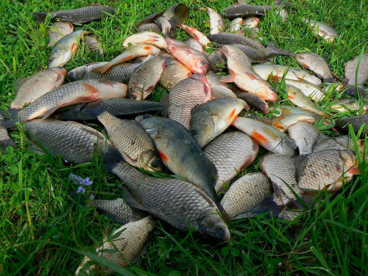 Отчеты с рыбалки в минской области. рыболовный форум