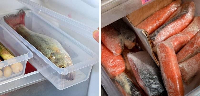 Сколько хранится свежая рыба в холодильнике