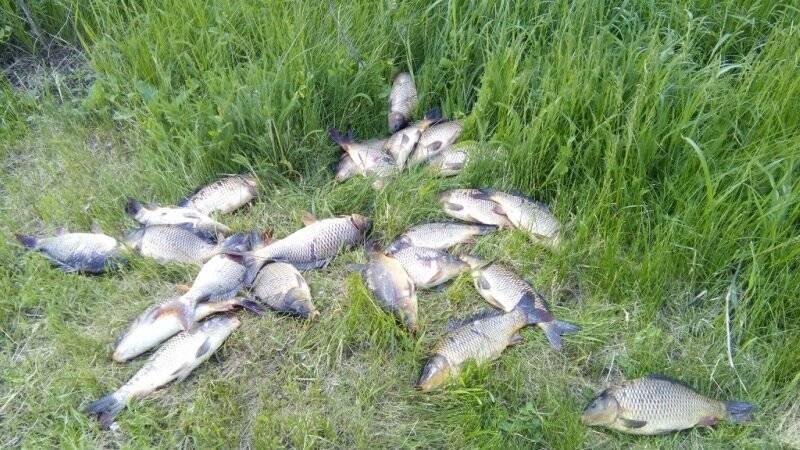 Таганрог - календарь рыболова. рыбалка в таганроге, график клёва рыбы.