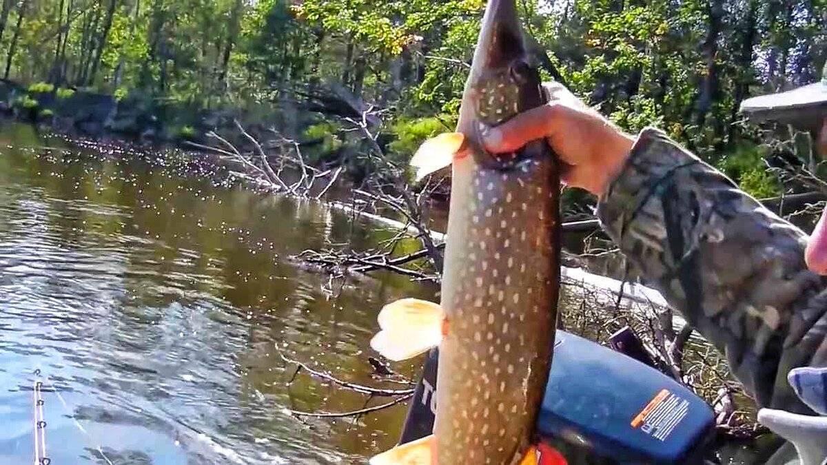 Щука на малых реках летом