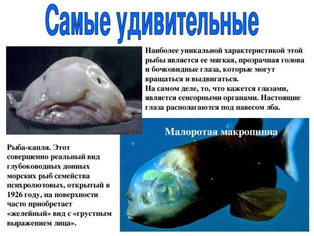 Все о рыбах: интересные факты и особенности знака зодиака :: инфониак