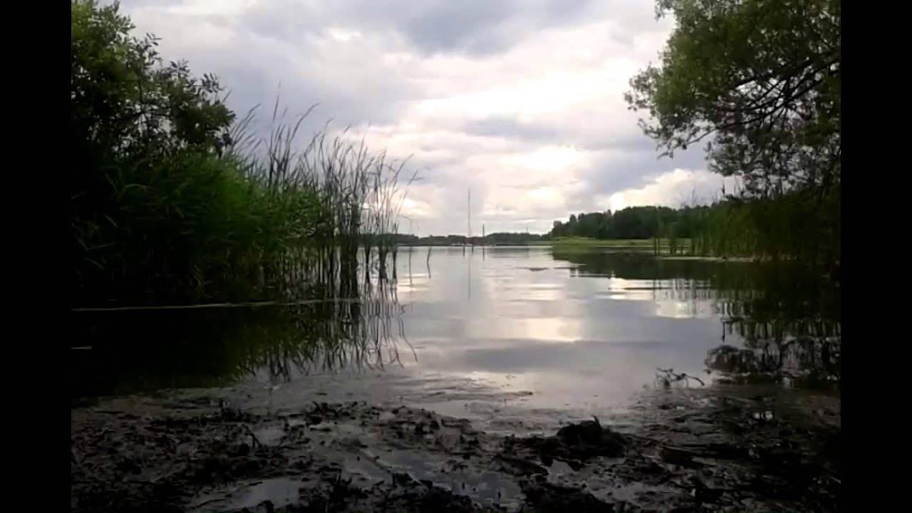 Белое озеро в вологодской области. рыба в белом озере, отдых и рыбалка, погода и прогноз клева, фото, как добраться —туристер.ру