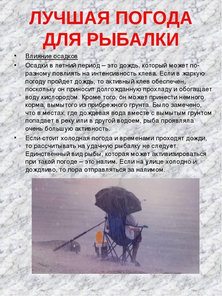 Погода для рыбалки: клюет ли рыба в дождь и при ветре