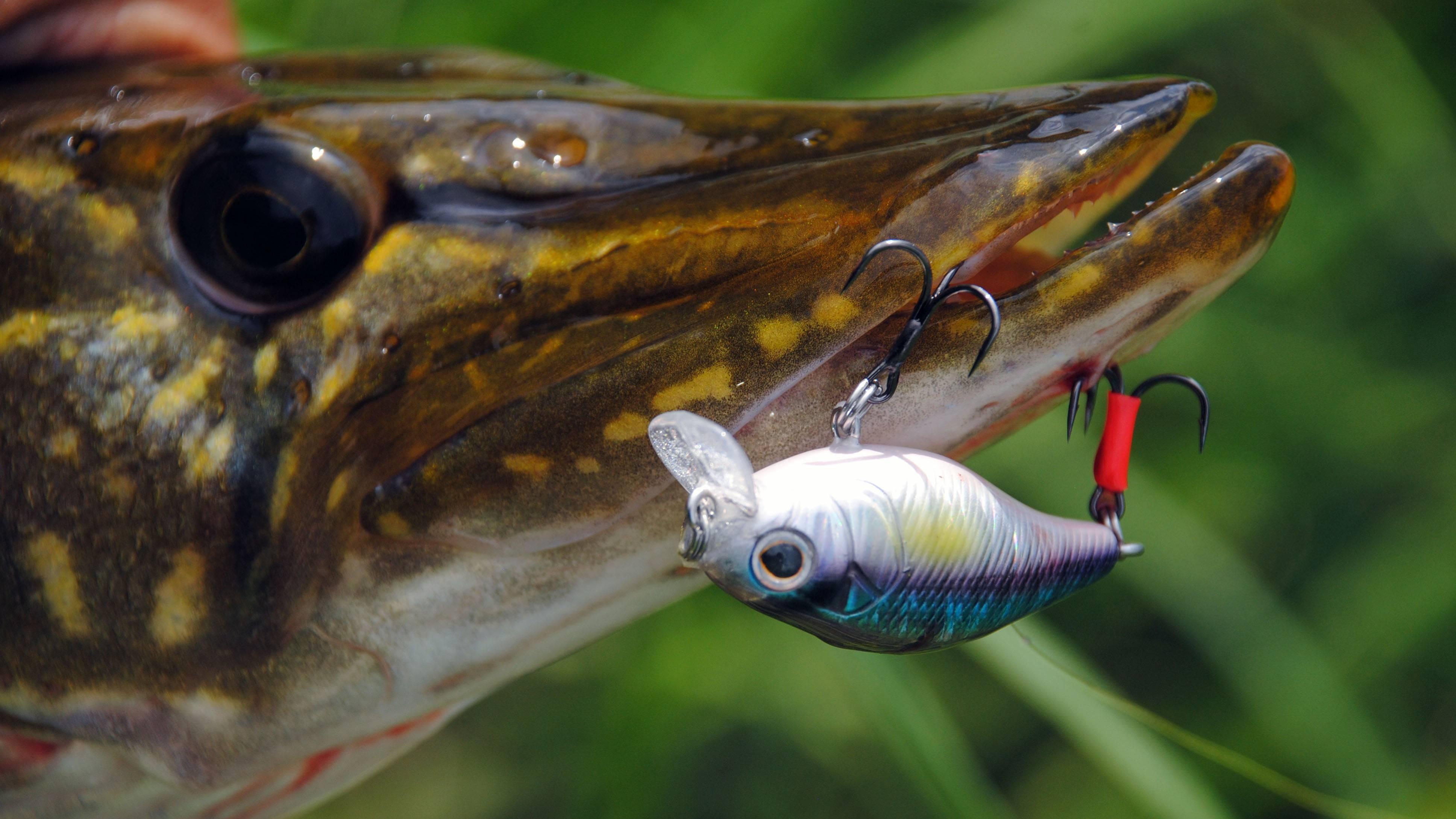 Ратлины на щуку: топ 10 ратлингов для зимней и летней рыбалки, ловля щуки на вибы зимой и летом