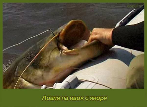 Оснастка для ловли сома на волге