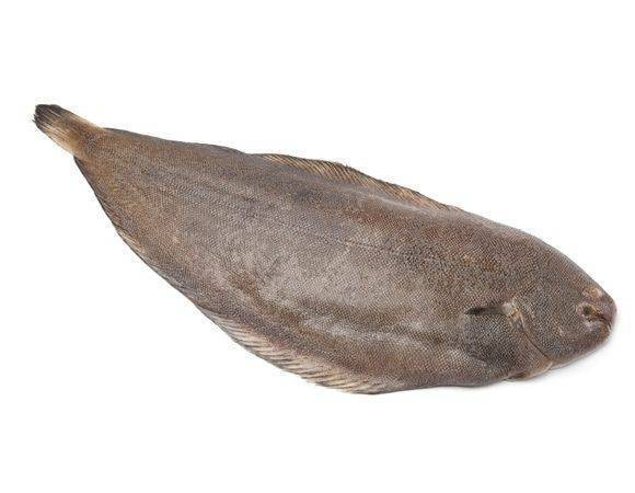 Пангасиус что за рыба, польза и вред, свойства икры