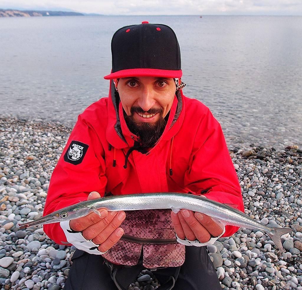 Рыба игла и сарган отличие. саргана называют рыбой стрелой