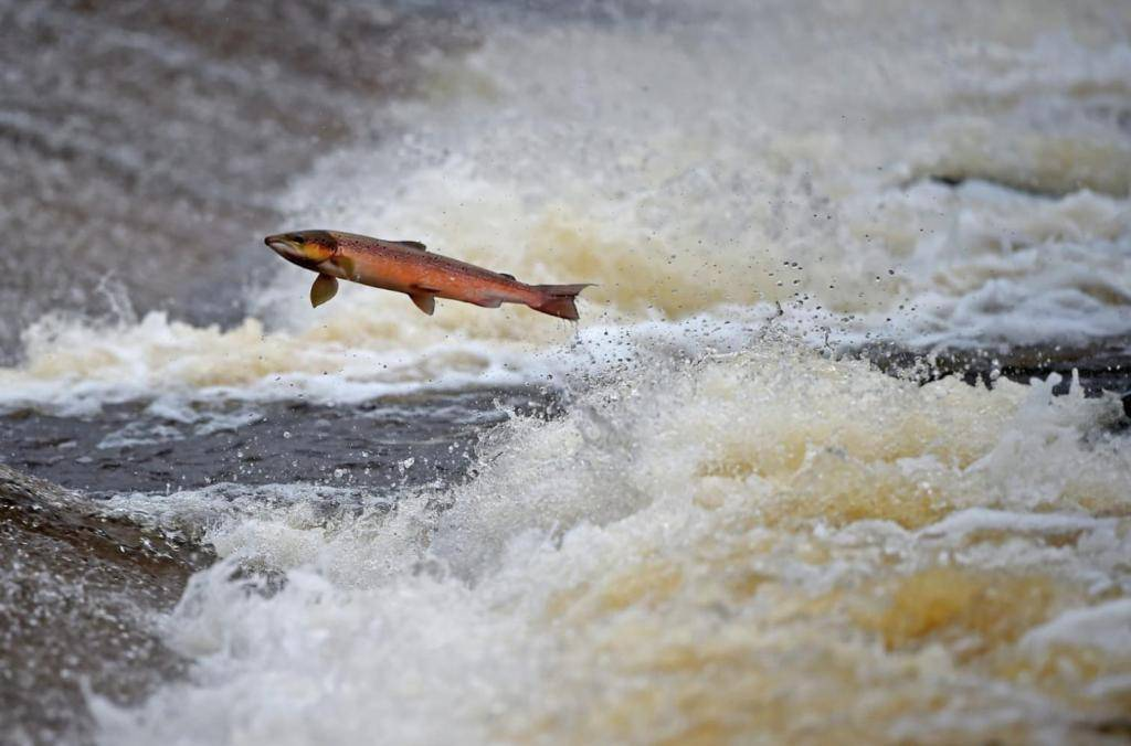 Поездка в британскую колумбию, посмотреть на нерест лосося.