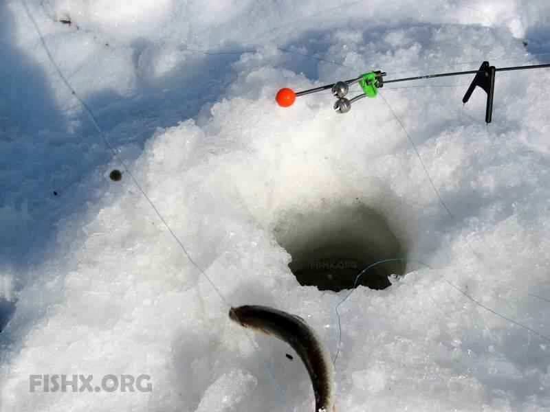 Зимний фидер: оснастка и подготовка монтажа для подледной ловли