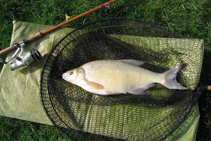 Ловля густеры в апреле - читайте на сatcher.fish