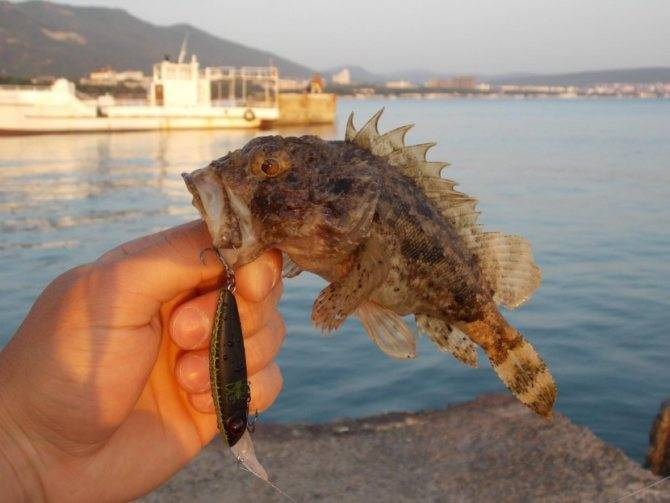 Ёрш - 56 фото очень популярной в евразии ключей рыбки