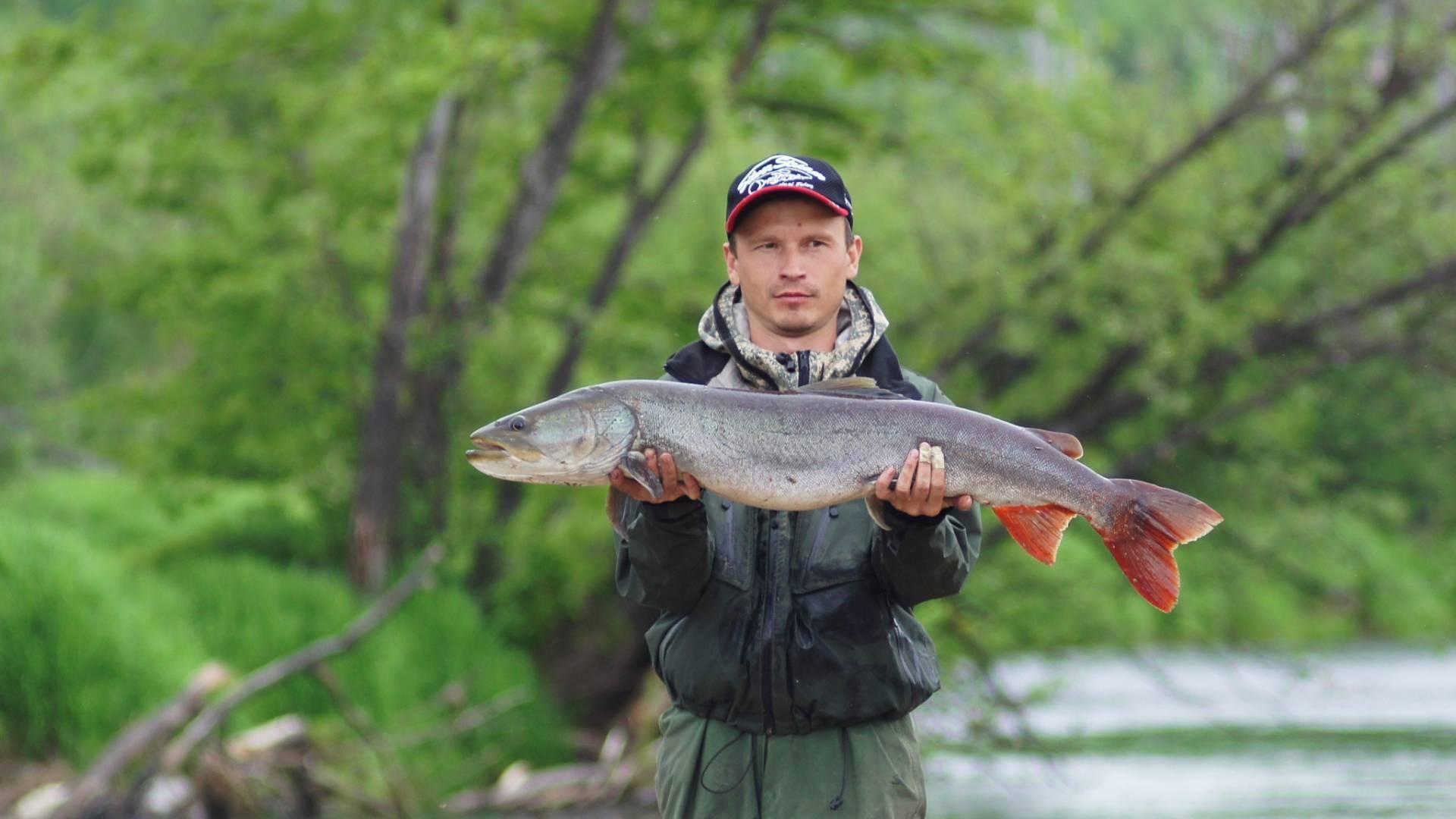 Таймень (рыба): где водится, как готовить, полезные свойства